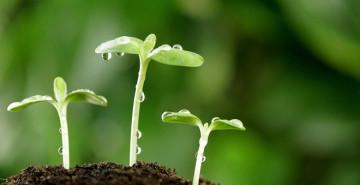 semillas 1